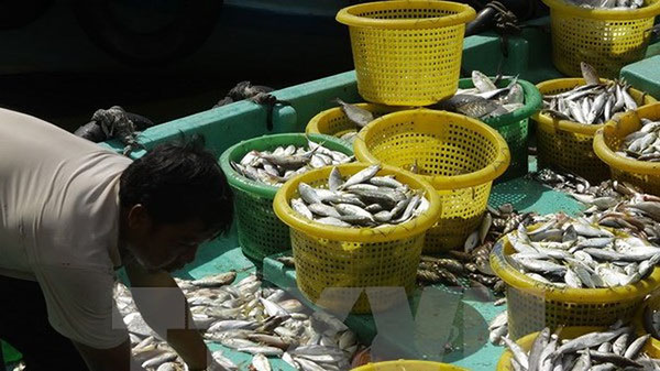 Hải sản Thái Lan